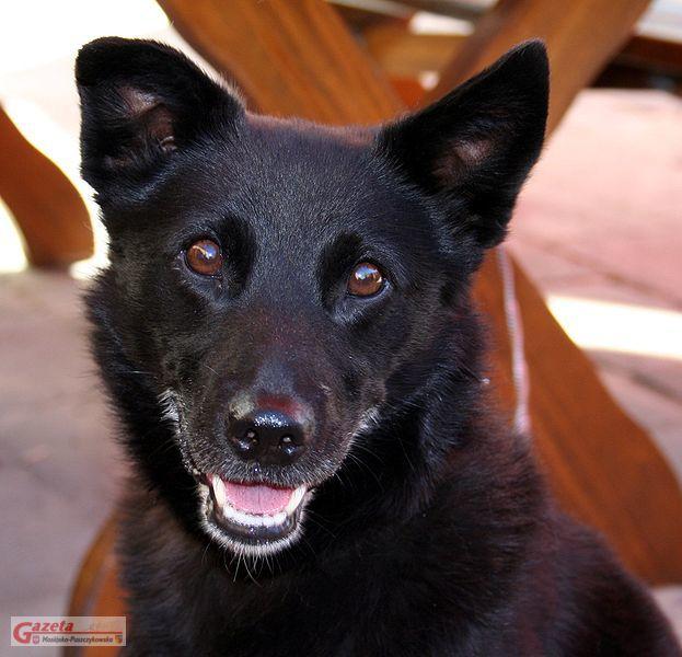 pies ze schroniska w mosińskim przytulisku