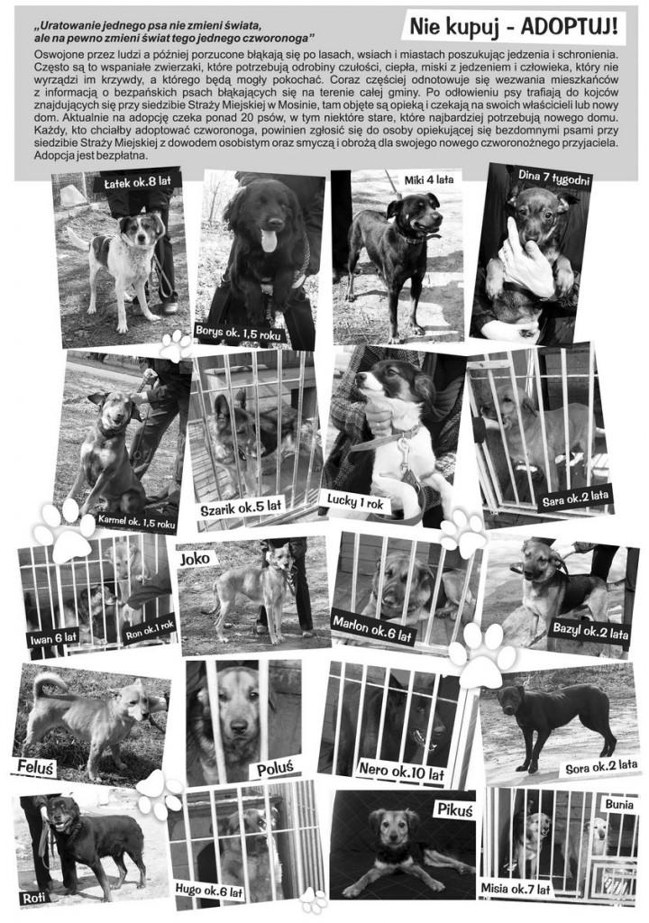 adopcje zwierząt mosina