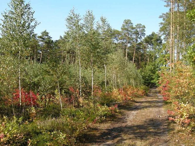 park krajobrazowy w Rogalinie