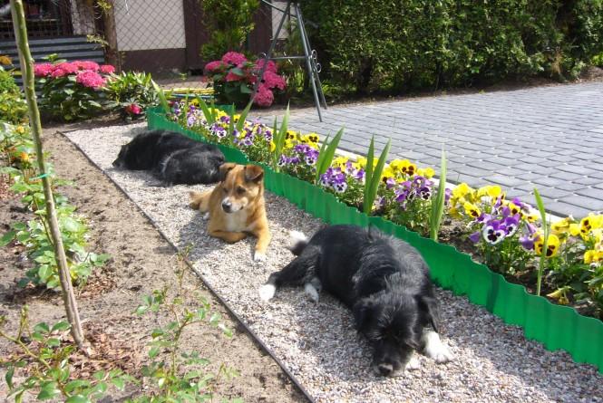 Oprócz ks.proboszcza na plebani mieszkają te oto stworzenia, także kotek