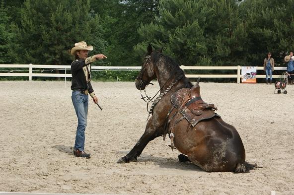 Horse show - pokazy konne