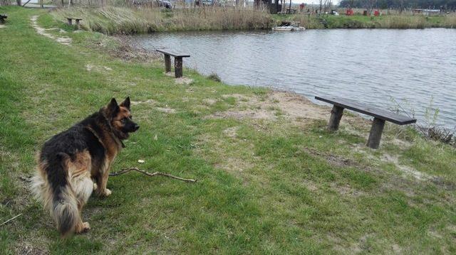 Łowisko U Macieja w Krośnie - pies