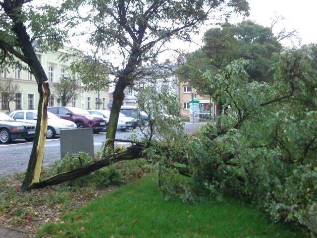 połamane drzewa na placu Października (rynek w Mosinie)