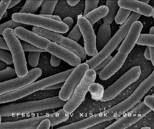 bakterie chorobotwórcze