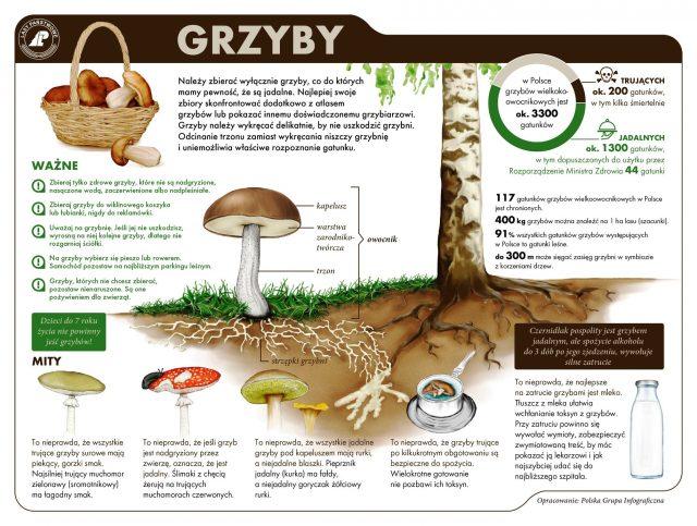 grzyby - infografika