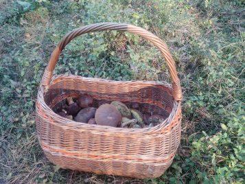 Grzyby - zbiory w okolicy Żabinka