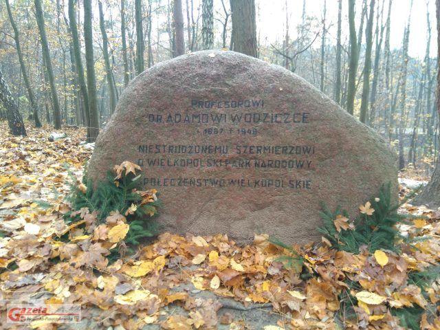 Głaz poświęcony Adamowi Wodziczce (głaz Wodziczki) w Wielkopolskim Parku Narodowym