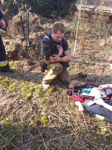 Strażacy z Puszczykowa ratowali psa, który wszedł do lisiej nory