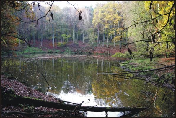 Zagłębienie wytopiskowe z oczkiem wodnym Żabiak