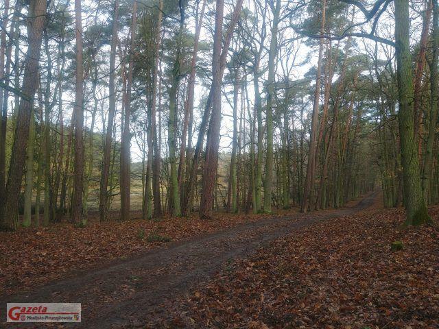 szlak - Wielkopolski Park Narodowy