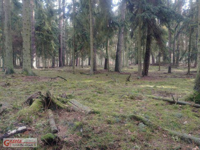 Wielkopolski Park Narodowy - WPN