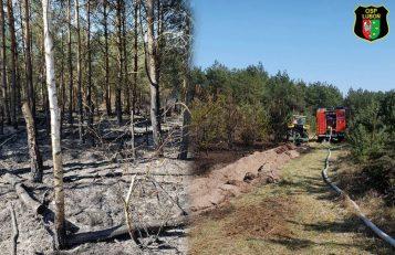 OSP Luboń - pożar lasu w Pecnej