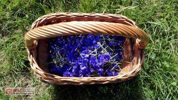 Modrakowe lekarstwo