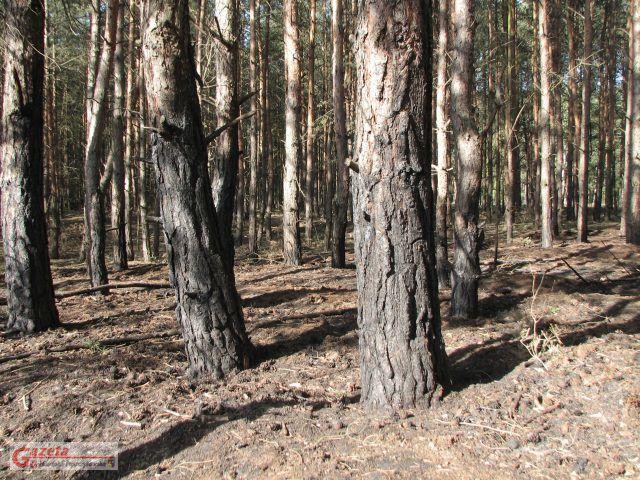pożar lasu fot. WPN