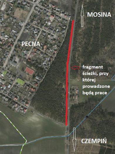 wycinka we wsi Pecna - mapka