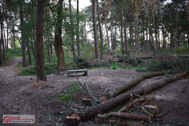 wycinka drzew w Parku Strzelnica w Mosinie