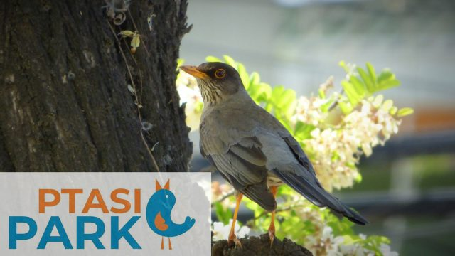 ptasi park Mosina