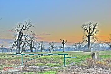 Dęby Szypułkowe - Rogaliński Park Krajobrazowy - łęgi Rogalińskie