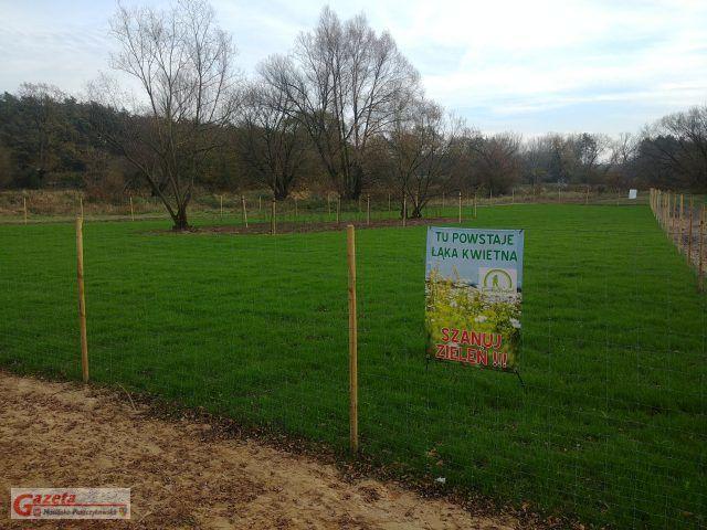 Łąka kwietna - Zakole Warty w Puszczykowie