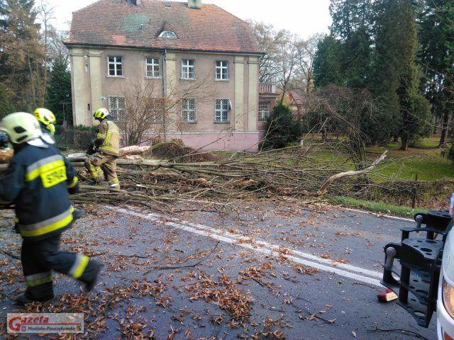 powalone drzewo na Szosie Poznańskiej