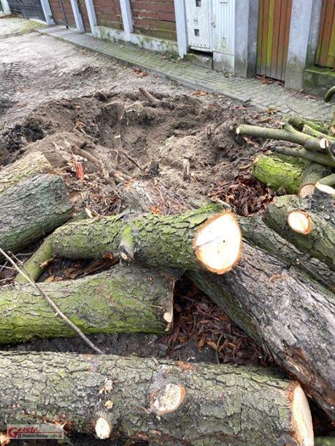wycięte drzewa, które rosły przy jednej z posesji na ulicy Leśnej w Krośnie