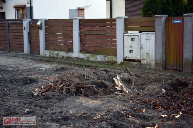 Wycinka drzew pod chodnik i ścieżkę rowerowa w Krośnie