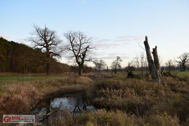 Rogaliński Park Krajobrazowy - deby na łęgach rogalińskich