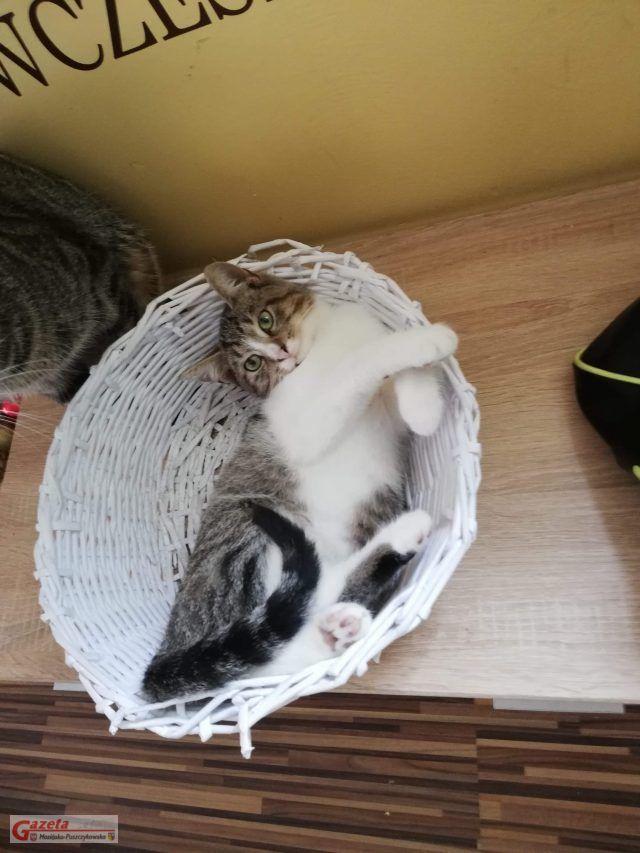 Cappuccino – najstarszy kociak, marzący o domu w którym przebywałby z innymi kotkami