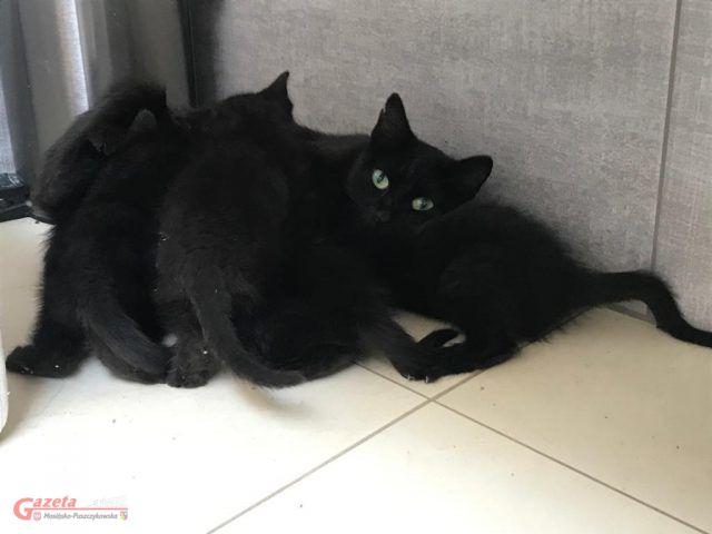 Kocia rodzinka podczas intymnych chwil karmienia