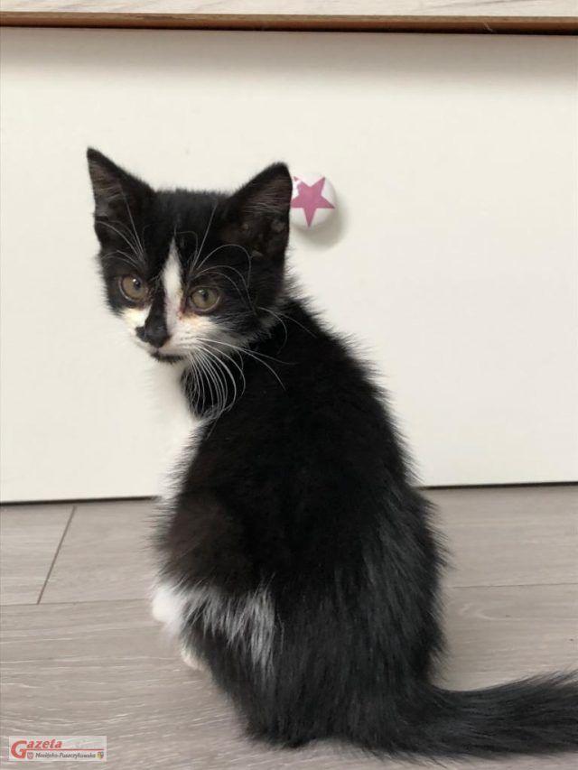 Kreska – miziasta kotka, nie odstępująca swojego tymczasowego opiekuna ani na krok