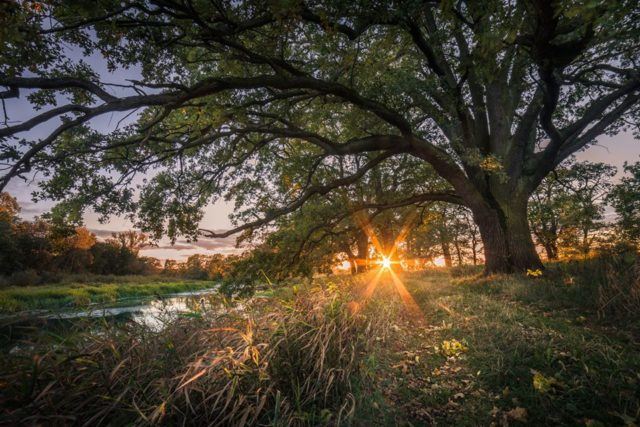 Wschód Słońca na łęgach rogalińskich
