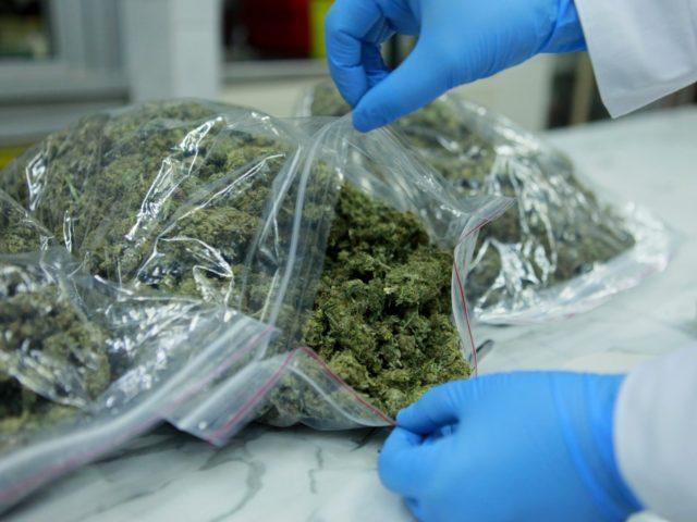 zabezpieczona marihuana fot. materiały operacyjne policji