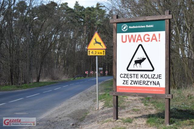 Uwaga kolizje ze zwierzyną droga Sasinowo - Wiórek