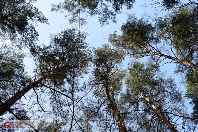 Wielkopolski Park Narodowy WPN - las