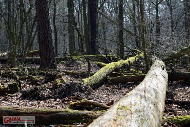 Obszar ochrony ścisłej Grabina - Wielkopolski Park Narodowy WPN