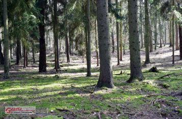 las - Wielkopolski Park Narodowy WPN
