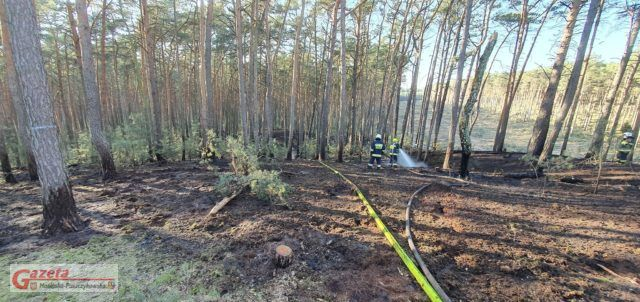 pożar lasu w Nowinkach fot. OSP Mosina