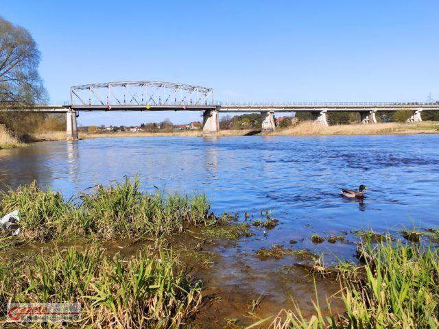 Warta Most Rogalinek - niski stan wody