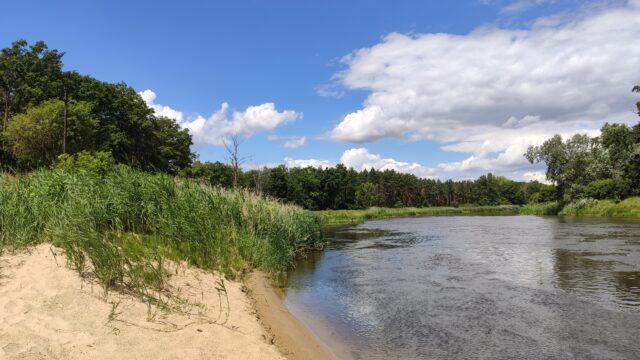 rzeka Warta - rezerwat Krajkowo (Tuchoń)