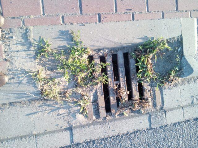 zaniedbana studzienka kanalizacyjna w gminie Mosina fot. Czytelnik GMP
