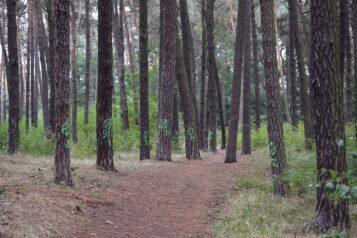 Drzewa w parku Strzelnica przeznaczone do wycinki