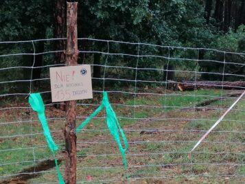Nie dla wycinki w parku Strzelnica w Mosinie