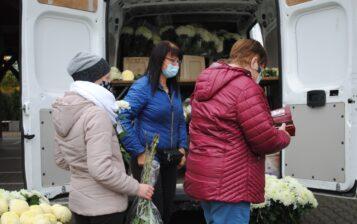 Chryzantemy - pomoc w czasie epidemii