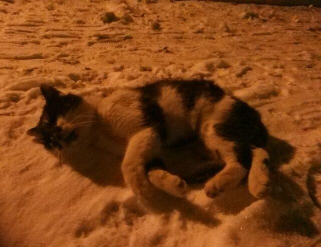 Martwy kot na śniegu