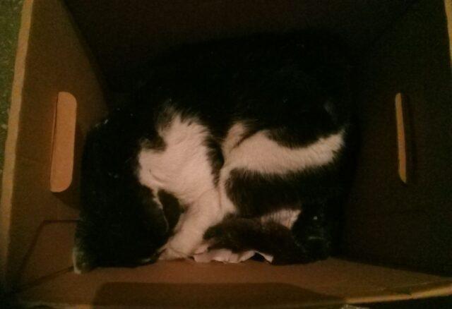 Martwy kotek w kartonie