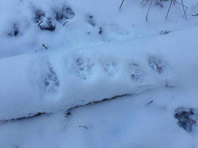 Tropy wilka w WPN