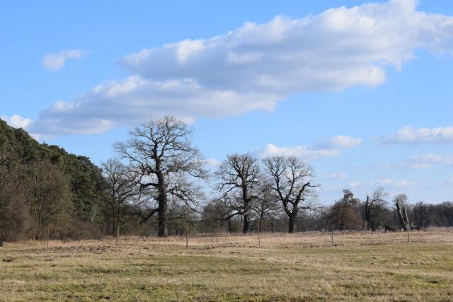 Już niedługo na drzewach pojawią się liście.