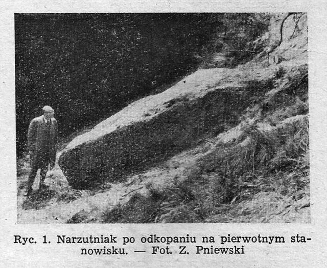 Narzutniak po odkopaniu na pierwotnym stanowisku fot. Zygmunt Pniewski