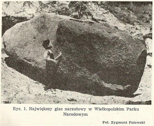 Największy głaz narzutowy w Wielkopolskim Parku Narodowym fot. Zygmunt Pniewski
