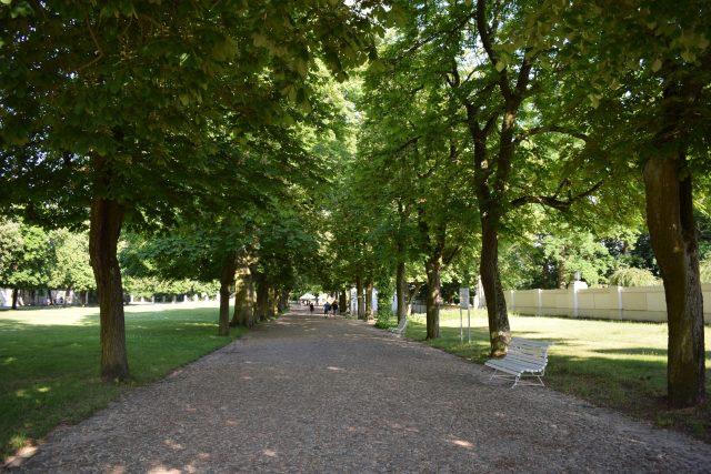 Park przy pałacu w Rogalinie